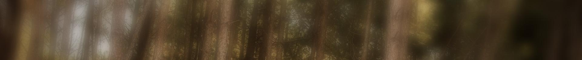 Matériel forestier Gironde, Matériel forestier Haut des landes, Mécanique forestière Gironde, Mécanique forestière Haut des landes, Pièce détachée forestière Gironde, Pièce détachée forestière Haut des landes, Réparation et maintenance Gironde, Réparation et maintenance Haut des landes, Vente de matériel forestier
